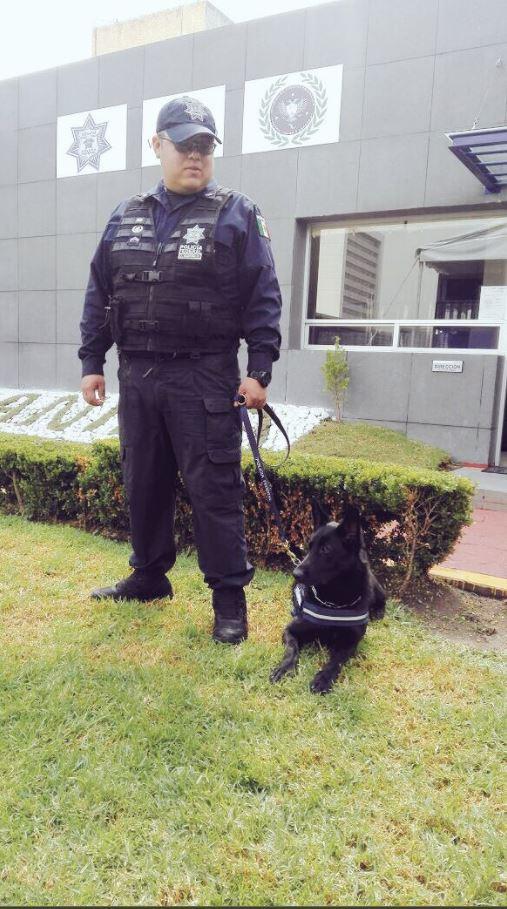 Policias reciben adiestramiento para tratar canes