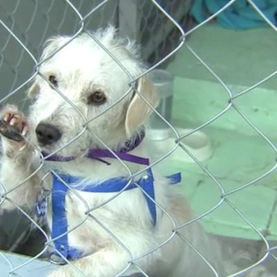 Dieciocho perros inauguran nuevo albergue para canes del Metro CDMX