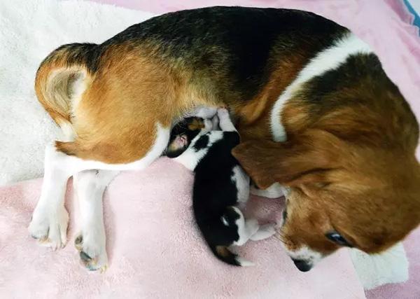 Científicos chinos crían primer perro clonado