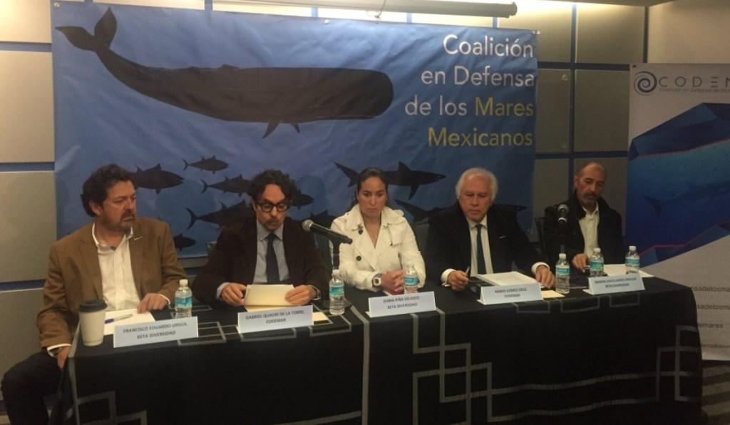 Especialistas advierten peligro para el atún aleta azul. (Twitter Defensa de los Mares)