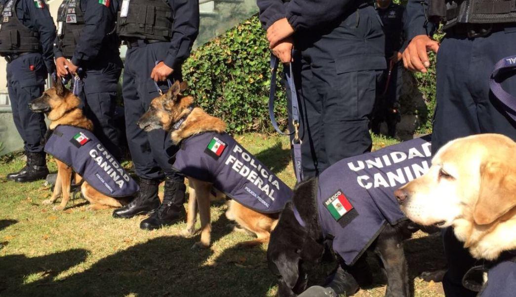 PGR, Elementos Caninos, Iniciativa Merida, Embajada De Estados Unidos, Noticias, Noticieros
