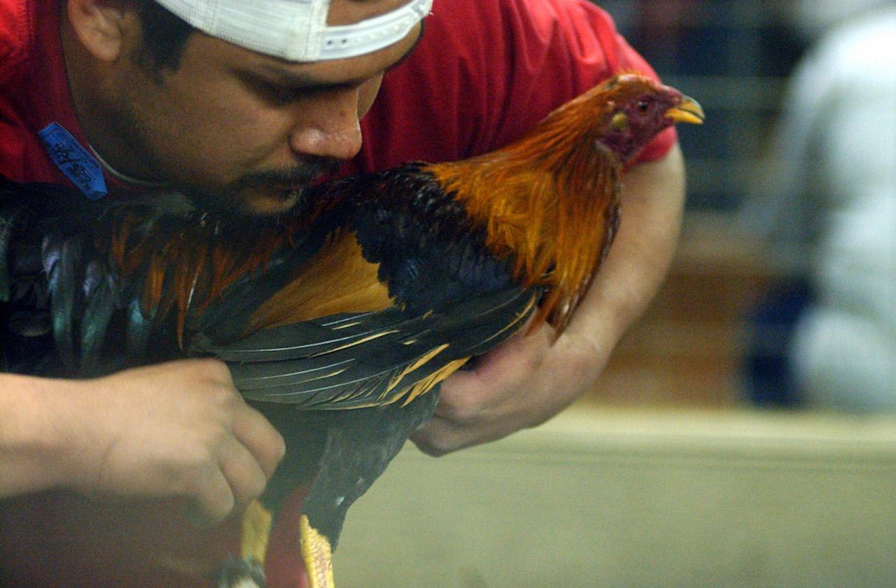 crueldad animal, maltrato animal, delito grave, justicia penal