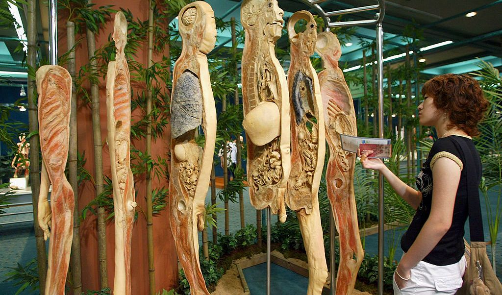 body the exhibition, proyecto de ley, Jan Cizinsky, Jiri Brenda, cadáveres, republica checa