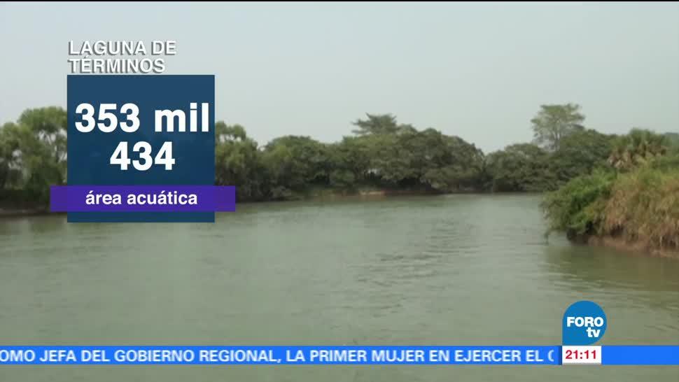 Laguna de Términos, declarada, área, protección, flora, fauna