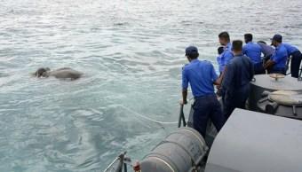 Mar, elefante, Marina, salvan, Sri Lanka, animales,