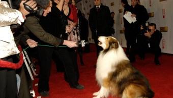 inteligencia social, hablar mascotas, antropomorfismo, perros