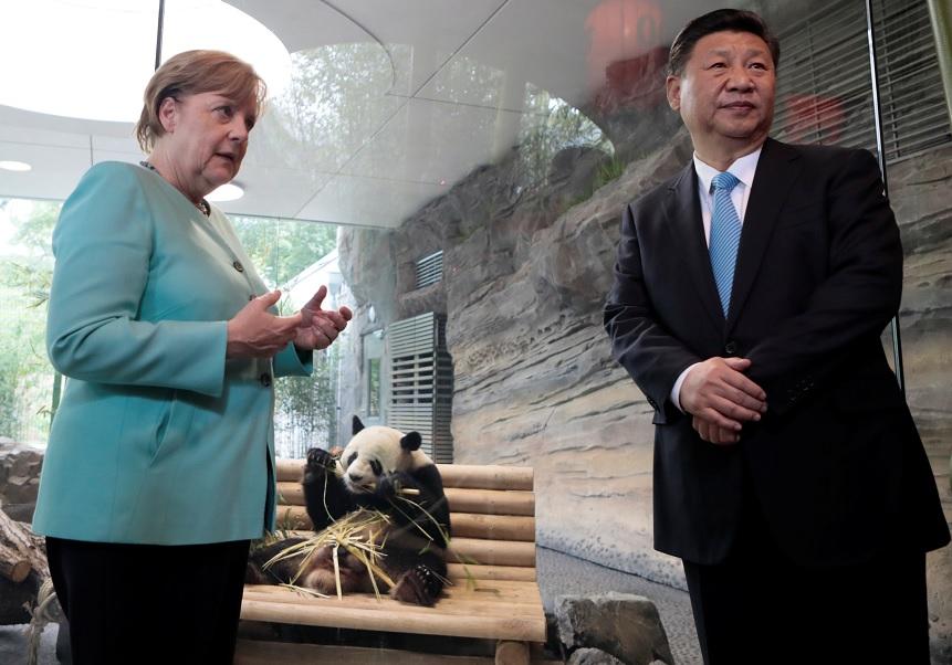 Jiao Qing, uno de los dos pandas gigantes chinos, es visto con la canciller alemana Angela Merkel y el presidente chino Xi Jinping (Reuters)