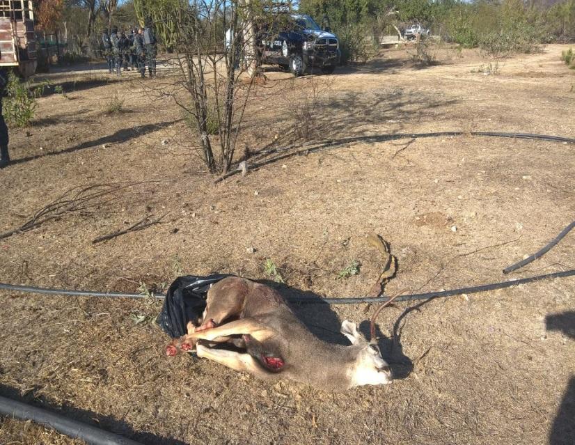un cazador obtiene de forma ilegal un venado