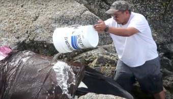 Orca, rescatada, Canadá, Ballenas Asesinas, Hartley Bay, Voluntarios, Rescate