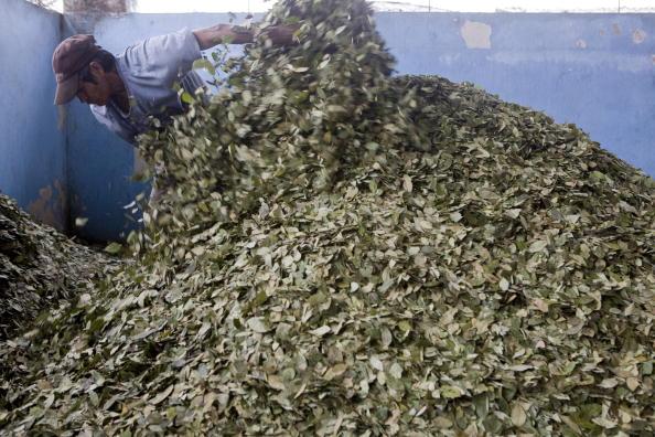 Bolivia, ONU, drogas, hoja de coca, narcotráfico, cultivos,