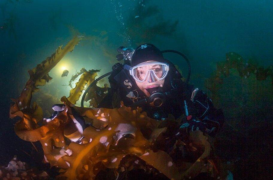 Sylvia Earle, bióloga, vaquita marina, totoaba, medio ambiente, ecología