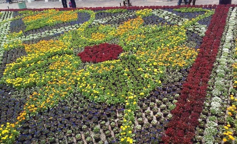Elaboran tapete monumental de flores en atlixco puebla for Viveros de plantas en atlixco