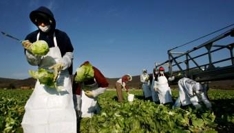 Trabajadores de línea empacan lechugas en una planta de Guanajuato