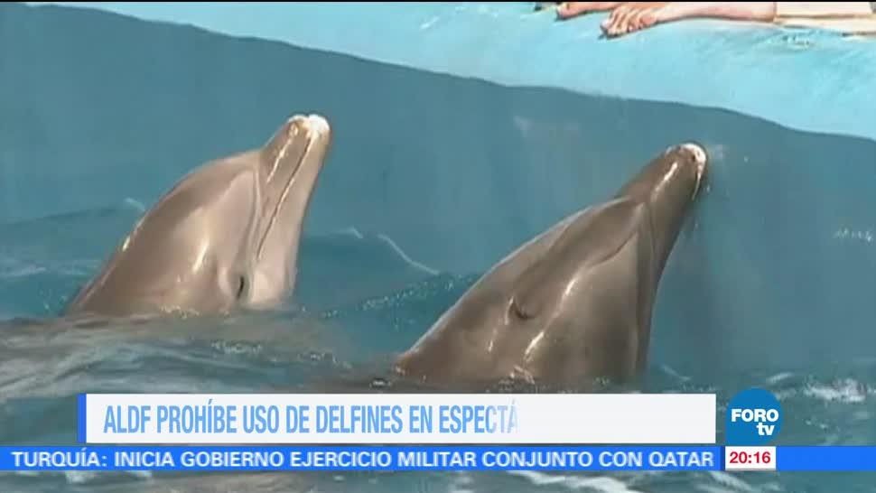 ALDF Prohíbe Uso Delfines Espectáculos Terapias