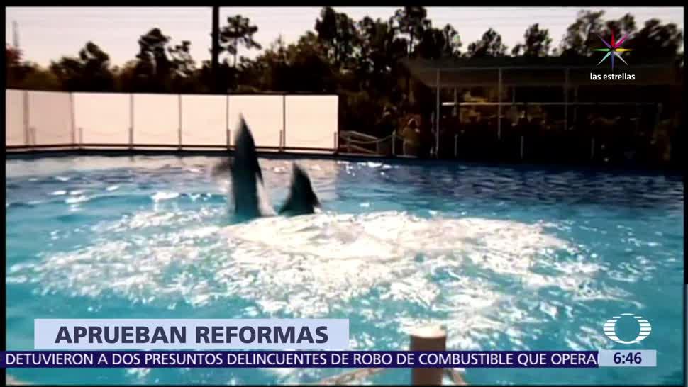 Prohíben, espectáculos, delfines, delfinoterapia