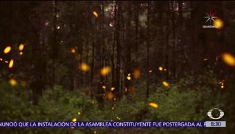 Las luciérnagas, Tlaxcala, espectáculo, natural
