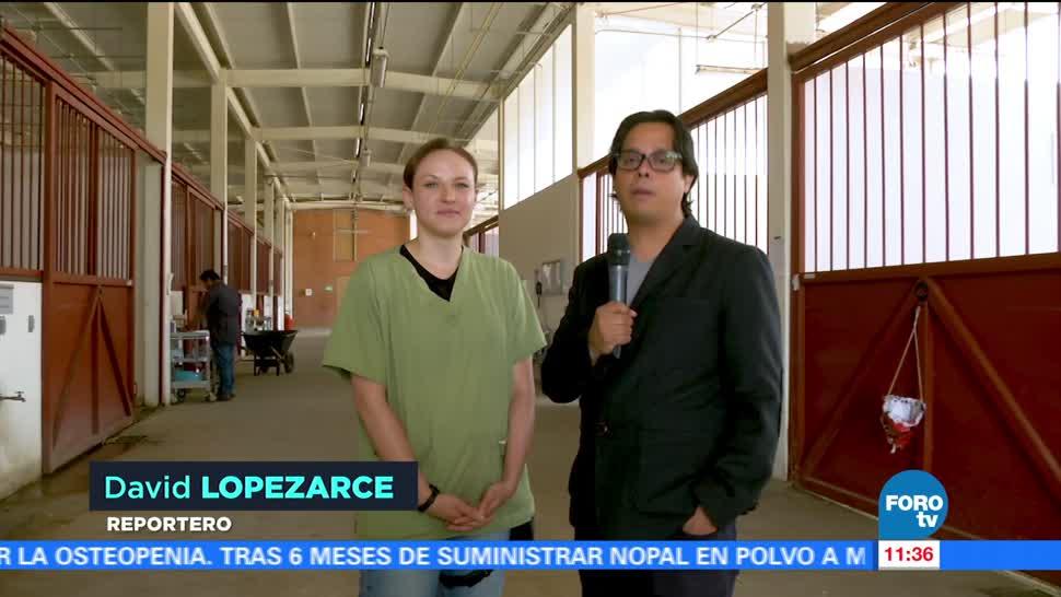 Aplican Acupuntura Salud Caballos Investigadores Fes Cuatitlan Unam