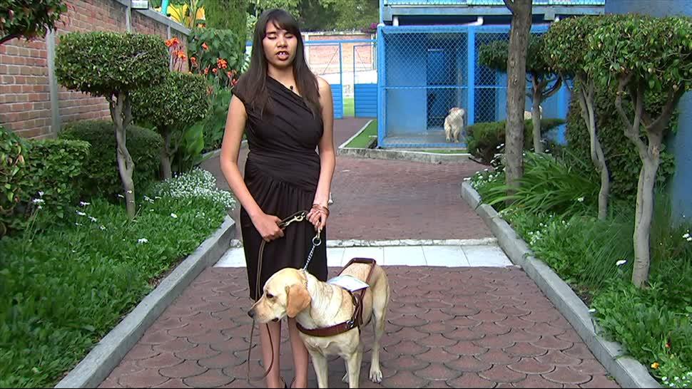 Graduan Perros Guia Personas Debilidad Visual