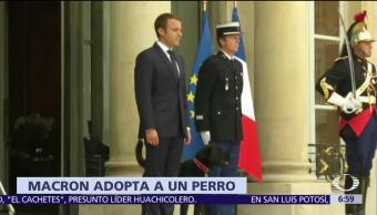 Emmanuel Macron Adopta Perro Nemo
