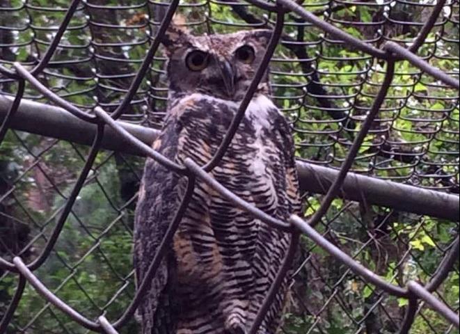Especialistas buscan preservar especies endémicas de Chiapas