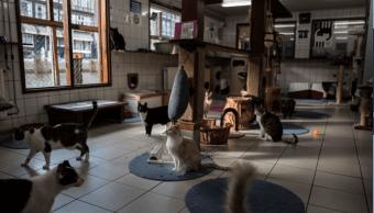 El albergue para gatos es atendido por unos veinte voluntarios