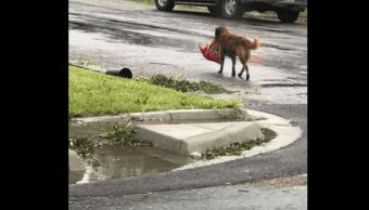 Otis huyó del huracán 'Harvey' llevando su alimento en el hocico