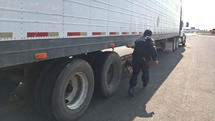 Policias federales descubren marihuana dentro de un vehiculo
