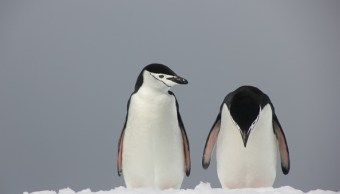 la antartida es afectada por fenomenos climatologicos