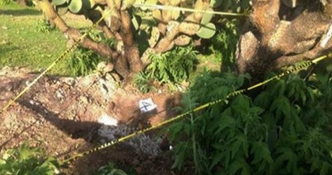 Zacatecas: Exhuman 7 cuerpos de fosas en Valparaíso