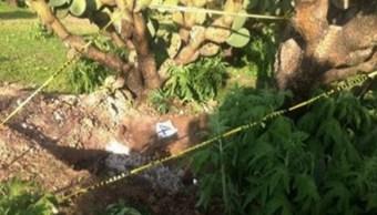 Hallan siete cuerpos en cuatro fosas clandestinas en Zacatecas