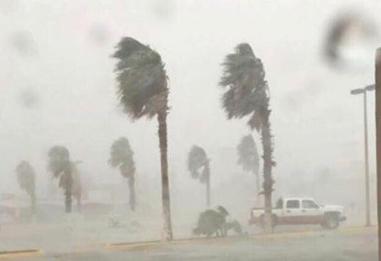 Tormenta causa caída de árboles en Acuña