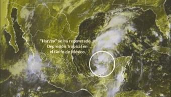 harvey se reorganiza como depresion tropical en el golfo
