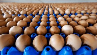 Huevos provenientes de una granja en Putten, Holanda