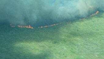 incendio consume mas 300 hectareas yucatan
