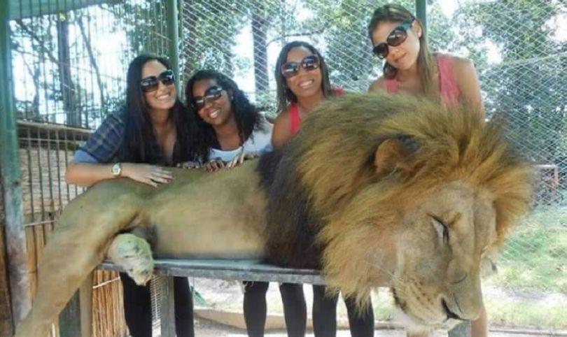 leones drogados zoologico