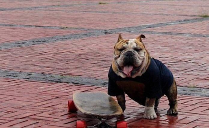 Realizarán tercera carrera Gordotón Bulldogs en Ciudad Universitaria