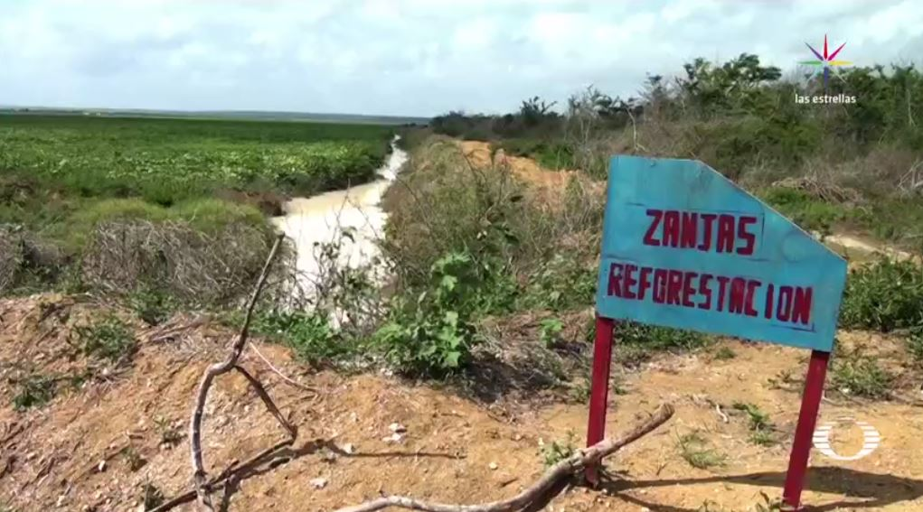menonitas generan afectaciones ambientales en campeche