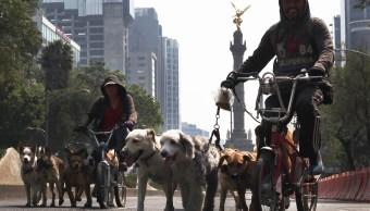 Jefe Gobierno, Ciudad México, inseguridad, alcalde