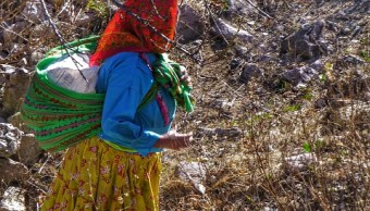 Tarahumaras abandonan tierras por violencia Chihuahua