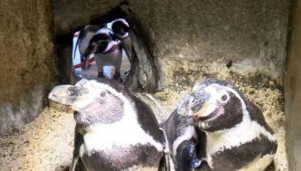 pinguinos en el acuerio de veracruz