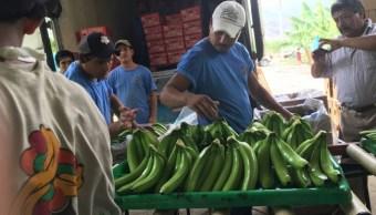 Producción de plátano Hecho en México