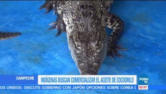Comunidad de Campeche busca comercializar el aceite de cocodrilo