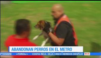 Abandonan, perros, Metro, CDMX