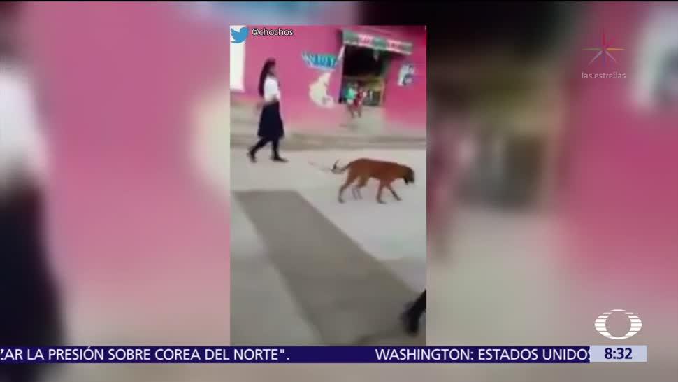 Perro marcha en desfile del 16 de septiembre