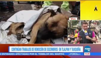 Titán, el perro rescatista que recibe suero por fatiga