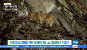 Segundo binomio recorre edificio que colapsó en SLP y Medellín