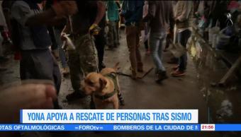 'Yona' logra salvar vidas tras el sismo de 7.1 grados