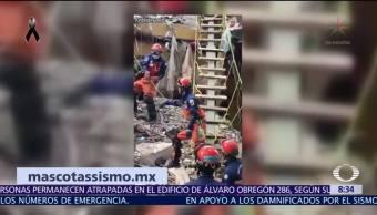 Rescatan a perro, loro y tortuga entre escombros en la CDMX