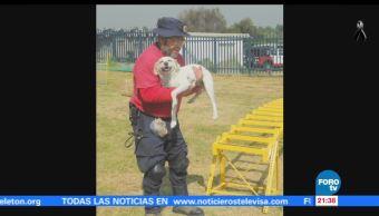 'Hueso', de perro callejero a rescatista de la UNAM