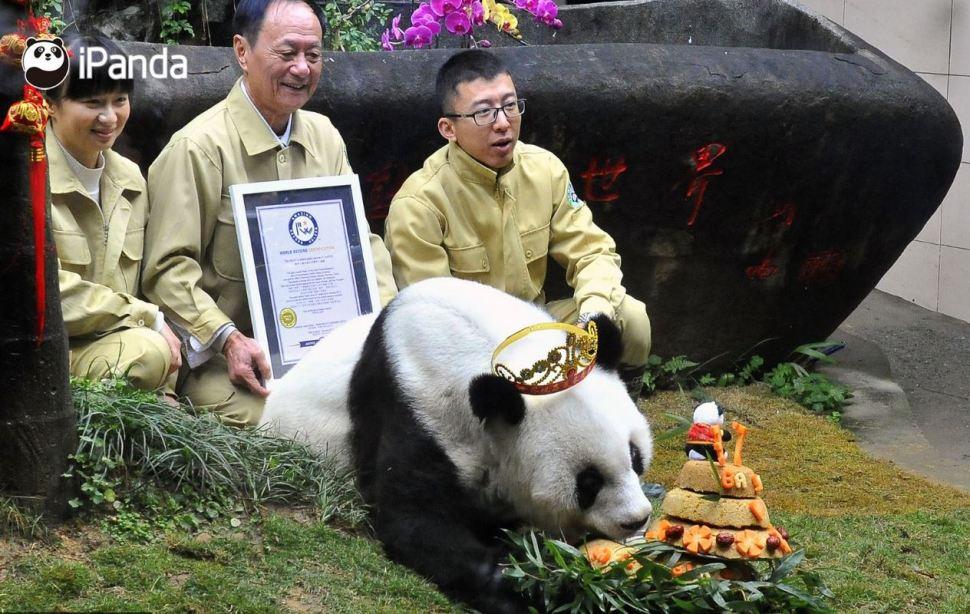 osa panda longevo mundo muere china